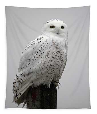 Snowy Owl In Fog Tapestry