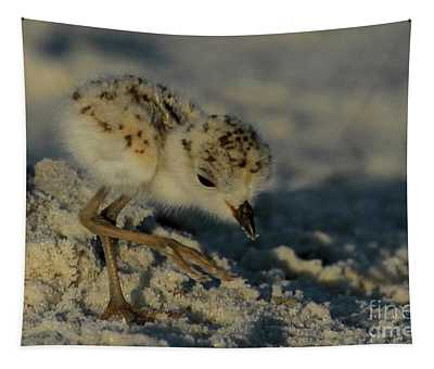 Snowy Plover On The Hunt Tapestry