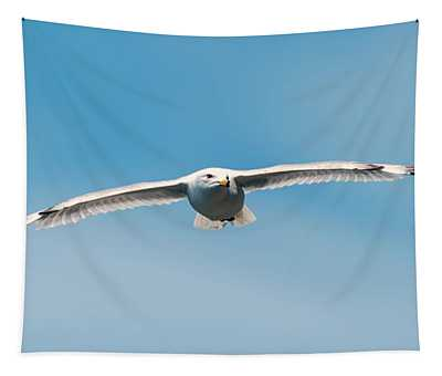 Tapestry featuring the photograph Soaring Gull by Matthew Nelson