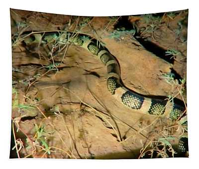 Tapestry featuring the photograph Sonoran Desert Longnosed Snake Vintage by Judy Kennedy
