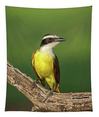 South Texas Great Kiskadee Tapestry