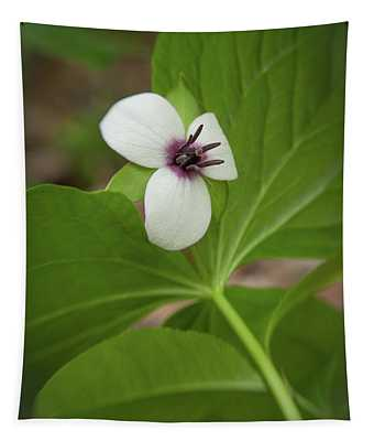 Southern Nodding Trillium 2 Tapestry