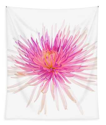 Spider Mum Or Chrysanthemum On A White Tapestry