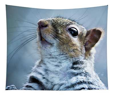 Squirrel With Nose In The Air Tapestry