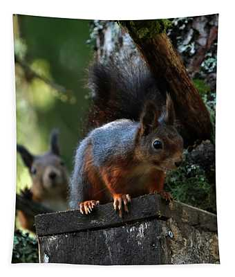 Squirrels Tapestry