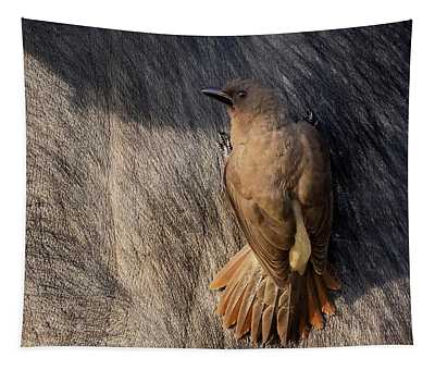 Sub-adult Yellow-billed Oxpecker On Cape Buffalo Tapestry