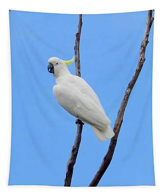 Sulfur Crested Cockatoo  Tapestry