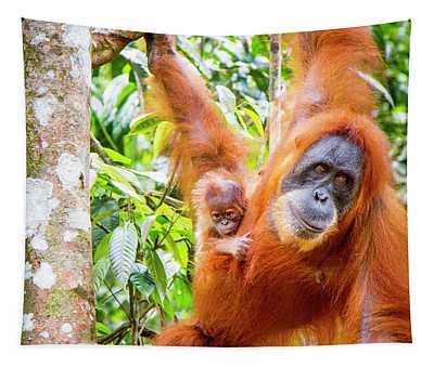 Sumatran Orangutan Female With Young, Sumatra, Indonesia Tapestry