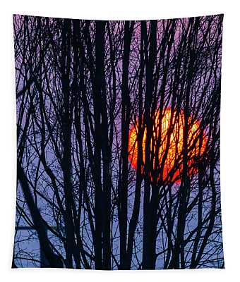 Sun Caught In Tree Branches Tapestry