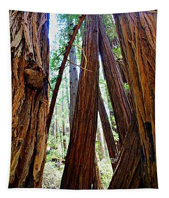Sunlight And Redwood Trees At Muir Woods National Monument Tapestry