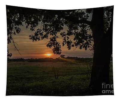 Sunset Under The Tree Tapestry
