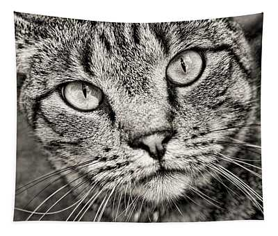 Tabby Cat Black And White Tapestry