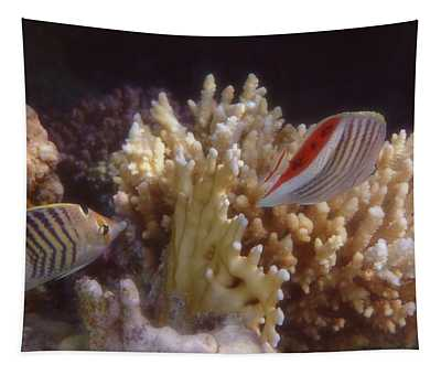 The Crown Butterflyfish Of The Red Sea Tapestry