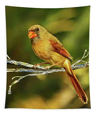 The Female Cardinal Tapestry