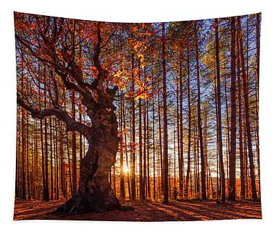 The King Of The Trees Tapestry