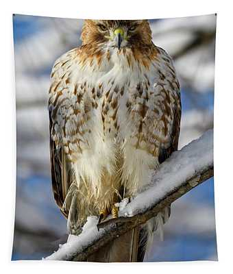 The Look, Red Tailed Hawk 1 Tapestry