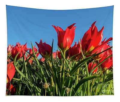 The Red Grails Of Nature Tapestry