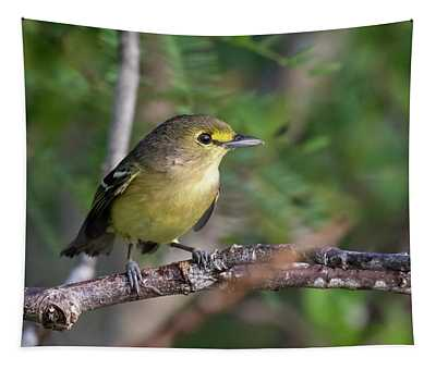 Thick-billed Vireo Tapestry