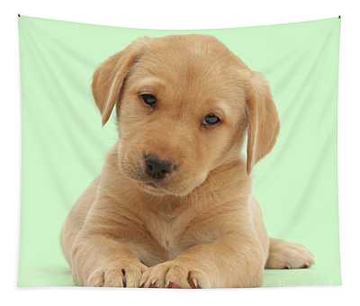Thoughtful Lab Pup Tapestry