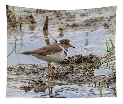 Three-banded Plover Tapestry