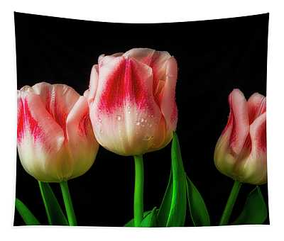 Three Red And White Lovely Tulips Tapestry
