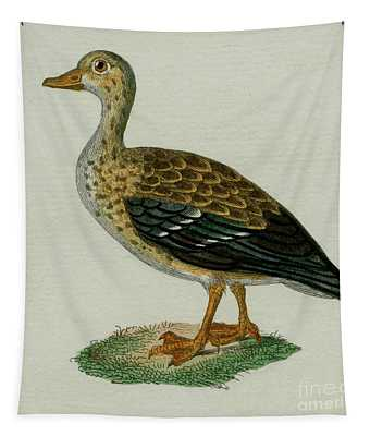 Teal, 1830 Tinted Engraving For Complete Works Of French Naturalist Comte De Buffon - 2 Tapestry