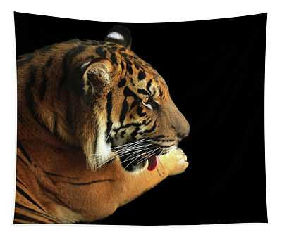 Tiger On Black Tapestry