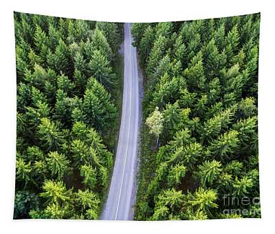 Top View Of Dark Green Forest Landscape In Winter. Aerial Nature Tapestry