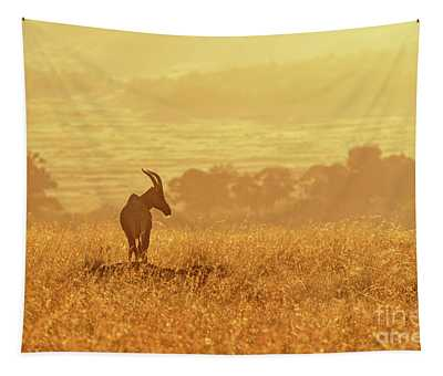 Topi In Early Morning Sunlight Tapestry