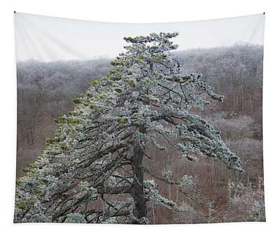 Tree With Hoarfrost Tapestry