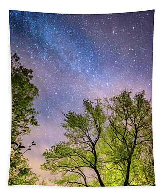 Trees And Stars At Night Tapestry