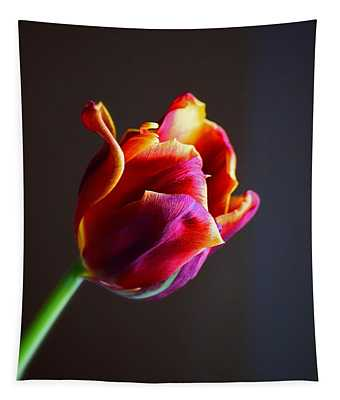 Tapestry featuring the photograph Tulip In The Light by Patti Whitten