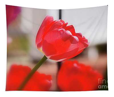 Tapestry featuring the photograph Tulip Reaching by Patti Whitten
