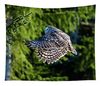 Ural Owl Flying In The Fir Forest With Sunshine On Its Back Tapestry