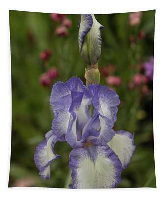 Variegated Iris In Lavender Tapestry