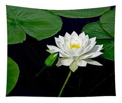 Waterlily And Bud  Tapestry