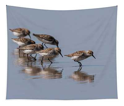 Western Sandpipers And Reflection Tapestry