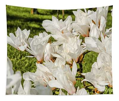 White Magnolien Blooming Tapestry