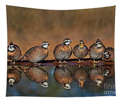 Wild Northern Bobwhite Colinas Virginianus Texas Tapestry