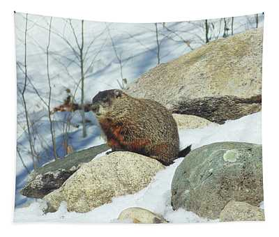 Tapestry featuring the photograph Winter Groundhog by Amy E Fraser