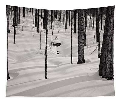 Winter Light In The Forest Tapestry