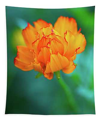 Wispy Orange Tapestry