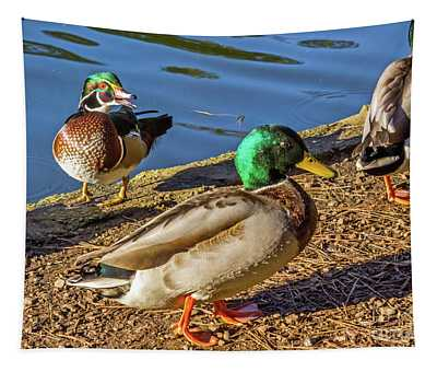 Wood Duck And Mallards Tapestry