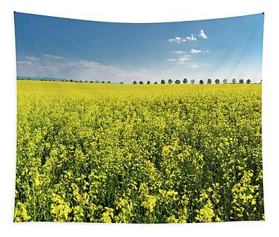 Yellow Canola Field And Blue Sky Spring Landscape Tapestry