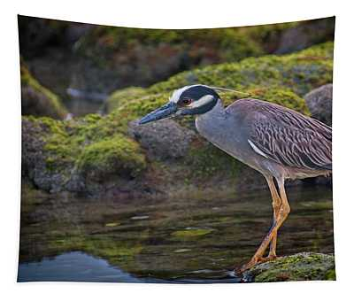 Yellow-crowned Night Heron Tapestry