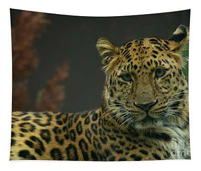 Young Amur Leopard Tapestry