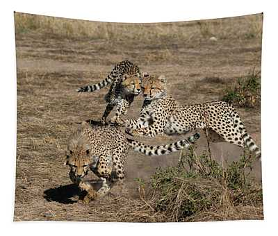 Young Cheetahs Tapestry