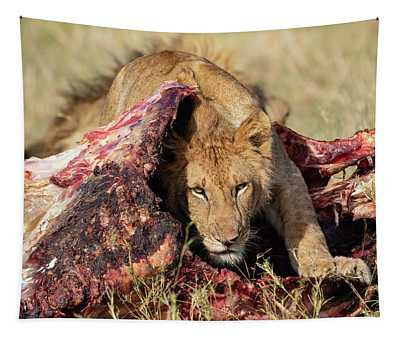 Young Lion On Cape Buffalo Kill Tapestry