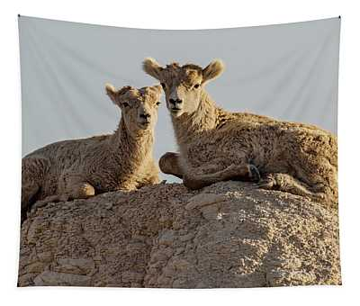 Young Mountain Sheep In Badlands National Park Tapestry