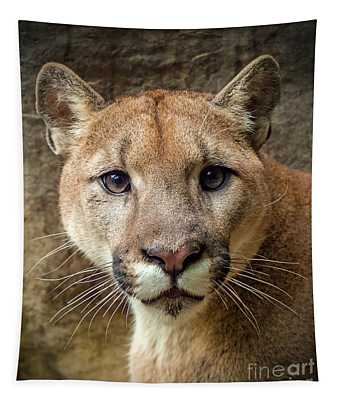 Young Puma Tapestry
